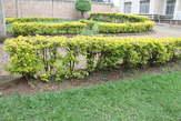 Houses for rent - Rwanda