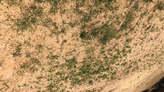 Terrain De Superficie D'un Hectare À Ngaparou Derrière L'école Bilingue Eba Sur La Route De Nguerigne - Sénégal