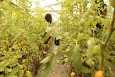 Constraction of Greenhouses and Dams - Somalia