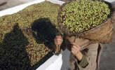 Huile d'olive Sahel Extra vierge - Tunisie