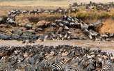 Serengeti safari packages at Nyange Adventures Ltd - Tanzania