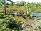 467 Acres for sale in Mityana Touchinh L.Wamala - Uganda