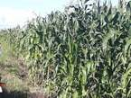 Farmland for Sale in Kiruhura - Uganda