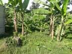 Plots for Sale in Migogwe Rwibale - Uganda