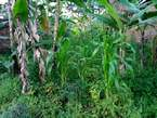 Plot for sale 100*50 with ready  - Uganda