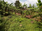 100 by 100 feet plot for sale in Bujjuko with the land title - Uganda