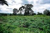 Plots of Land  at Kampala - Uganda