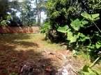 15 decimals land at Kansanga Muyenga - Uganda