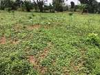 1 acre of land in kyanja on sale - Uganda