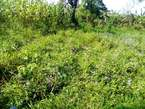 467 Acres of Fertile Land for Sale in Mityana - Uganda
