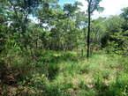 4500 sqm Land  - Zimbabwe